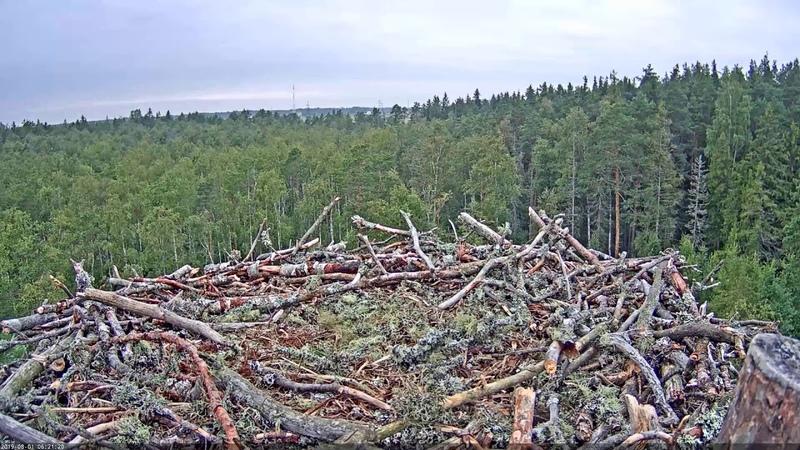 Онлайн веб камера - Камера в гнезде скоп - Эстония Kalakotkas