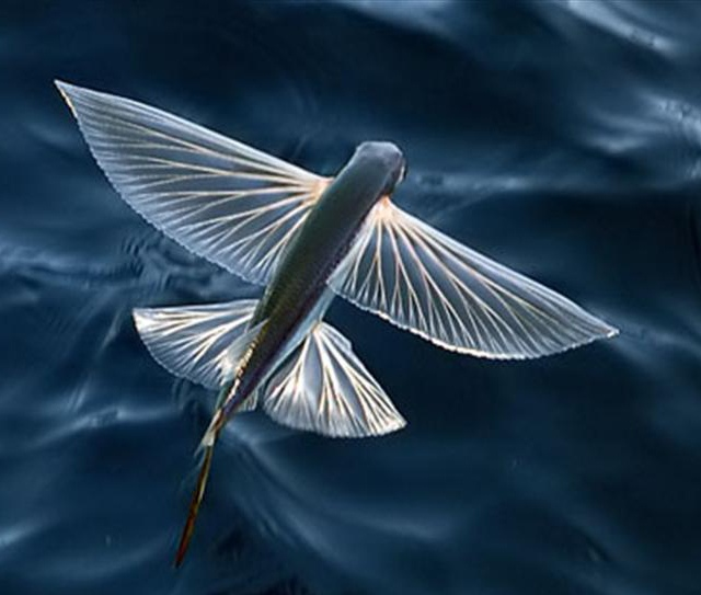 Золотые Самолетики Инков. Летающие Рыбки