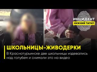 Краснотурьинские школьницы-живодерки издевались над голубем и снимали это на видео