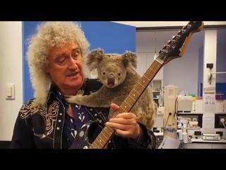 The koala Rock Star 🎤🐨🎸