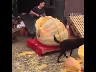 Это же надо было такую громадную тыкву вырастить. Вес таких гигантов может доходить до тонны.