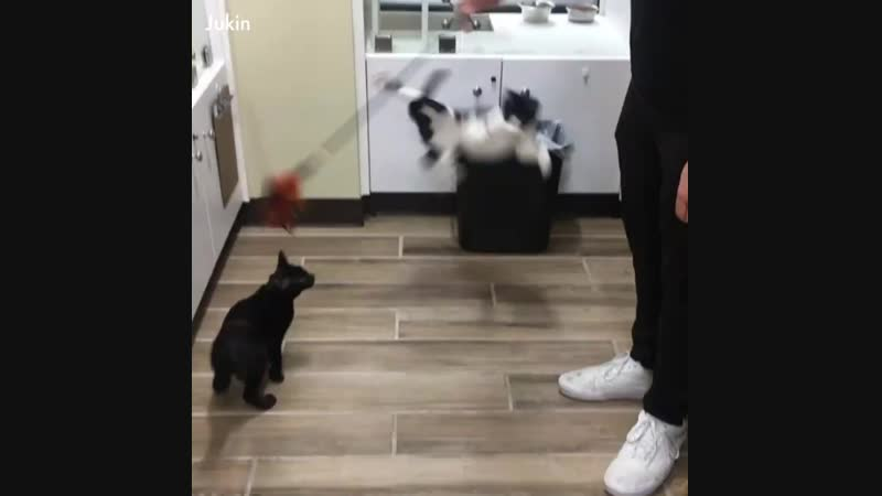 Not all cats are graceful! Не все кошки изящны!