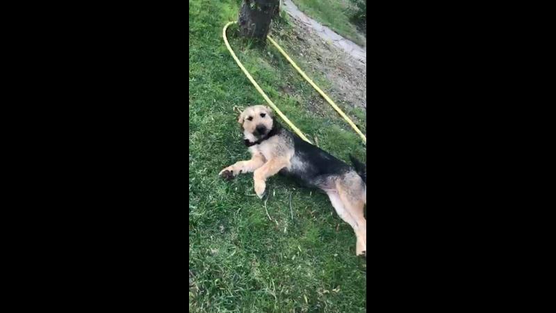 Видео от Путники солнца Помощь собакам юга России