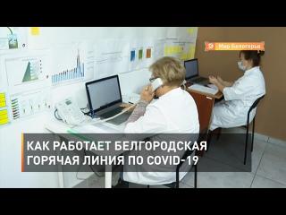 Как работает белгородская горячая линия по COVID-19