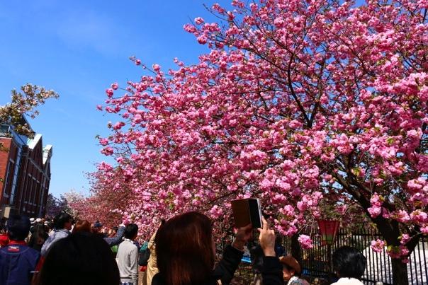 Вход на Монетный двор во время цветения вишни