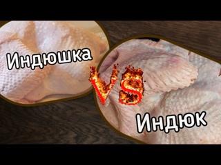 Волжская индейка с личного подворья kullanıcısından video