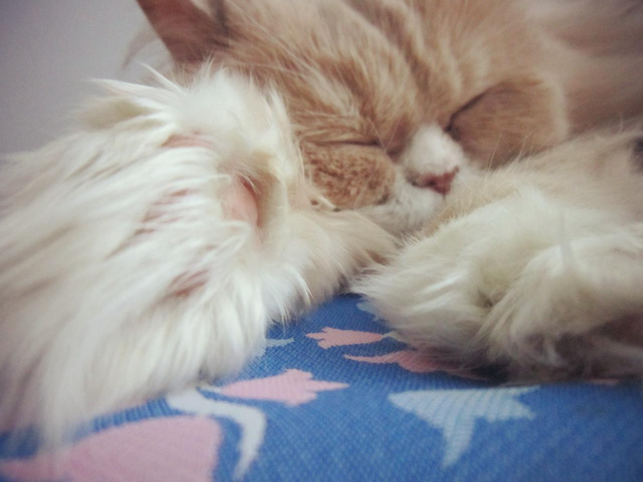 фото из альбома Kitty Yo №11