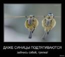 Фотоальбом Василисы Воробей