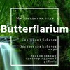 Баттерфляриум