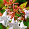 Каталог растений и цветов