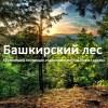 Башкирский лес
