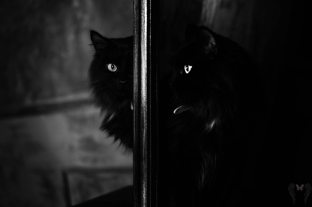фото из альбома Романа Соболева №15