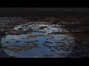Охота на гуся. Весна 2021. Архангельская область