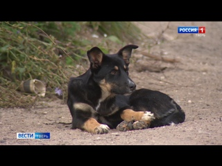 На жителей Тверской области нападают собаки