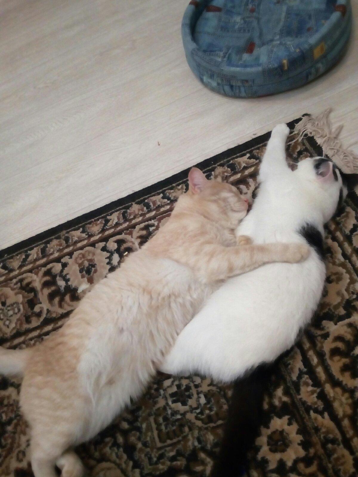 Помогите пожалуйста! Пропал кот большой,окрас персиковый...В районе