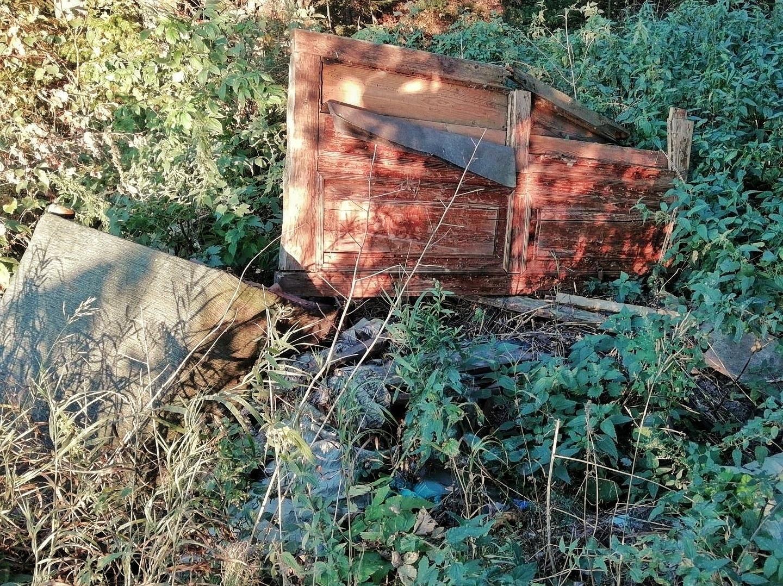 Катастрофтческая ситуация в лесу на территории Красного