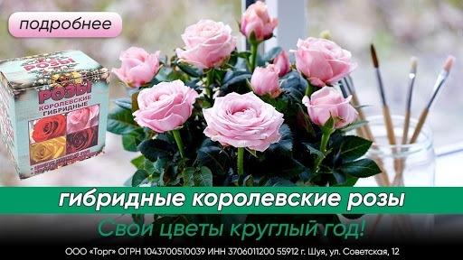 Кейс: «Королевские гибридные розы» в MyTarget!, изображение №7