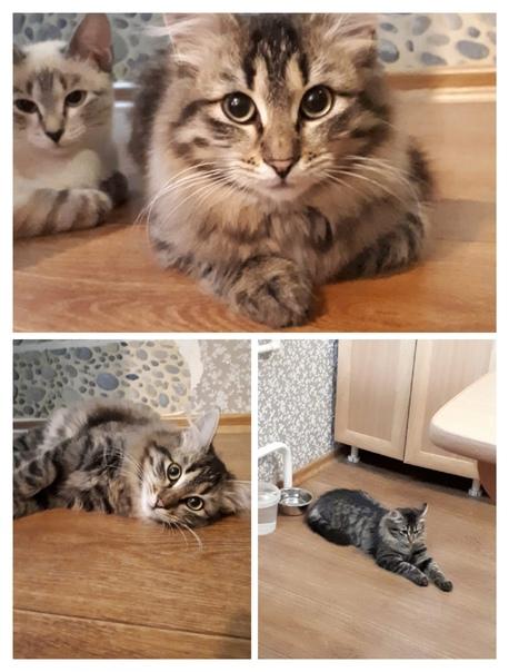 Молодой котик 6-7 месяцев, КАСТРАТ, ждёт своего хо...