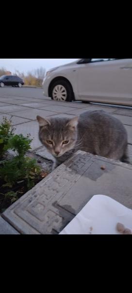 Дорогие друзья потерялась кошка, зелёные глазки, б...
