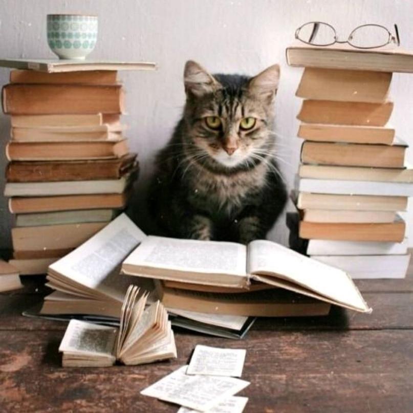 Можешь ли ты отнести на свой счет слова «книжный червь», «книголюб» или «библиоф...