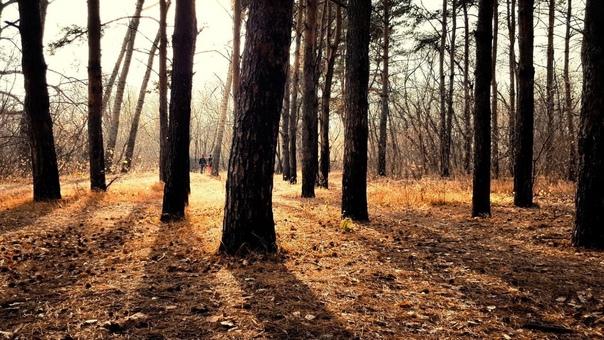 Осенний Парк Победы🍂📷 [id20565465|Александр Меха]...