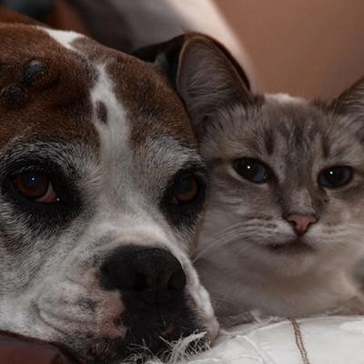 Приют Для-Собак-И-Кошек | ВКонтакте