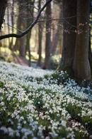 Народные приметы. 21 апреля – Родион-Ледолом. К этому дню «земля отходит от мороза и пробуждается»,