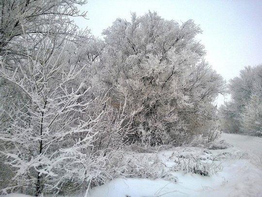 Синоптики прогнозируют первую морозную ночь - до -...