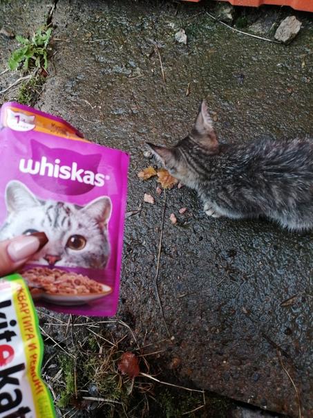 на володарского около кировского магазина бегает котёнок,...