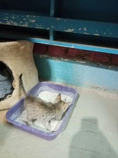 Маленький котенок, мышелов, живёт временно в пункт...