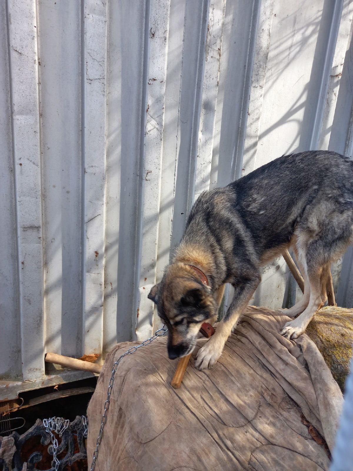 Пропала собака в районе Санэпидемстанции.Отзывается на кличку
