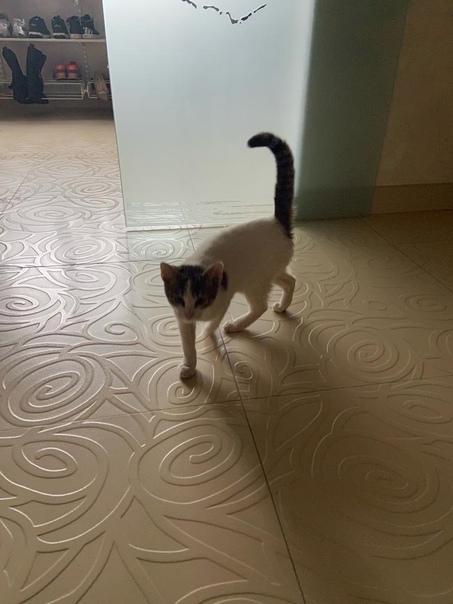 ******Чей котёнок? Целый день врывается в дом или ...
