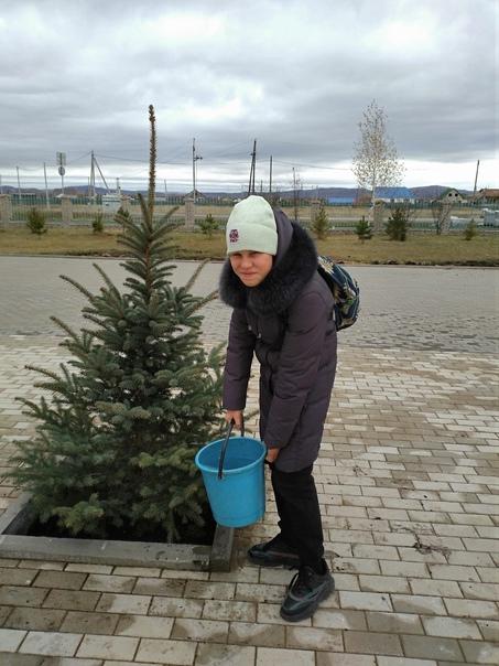 Холмогорские шестиклассники позаботятся о голубых елях
