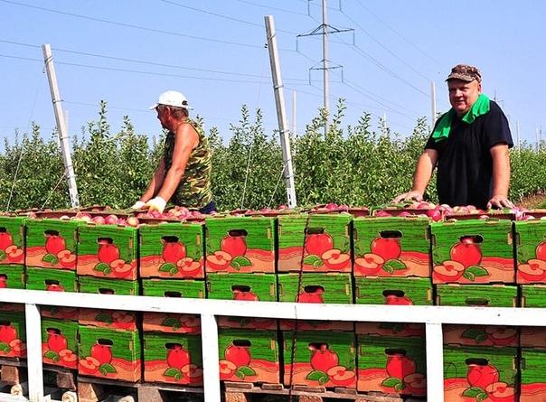 ▪️ Кубань выращивает почти половину объемов товарн...