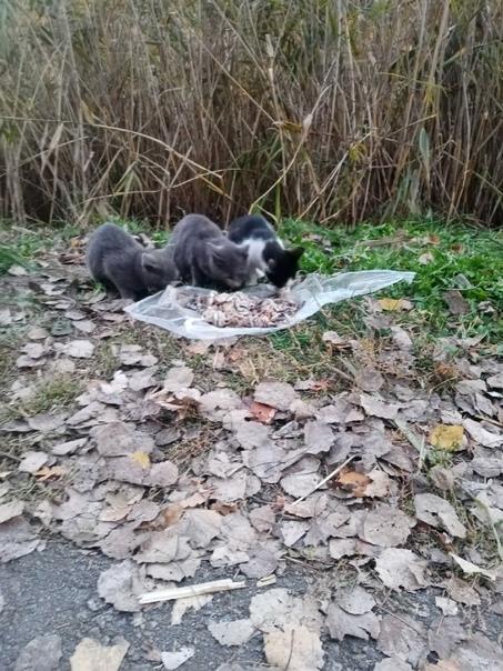 Здравствуйте! В парке Маршалково пропадают котята,...