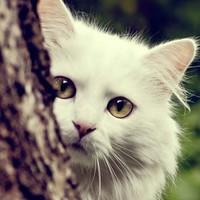 Личная фотография Игоря Кубарева ВКонтакте