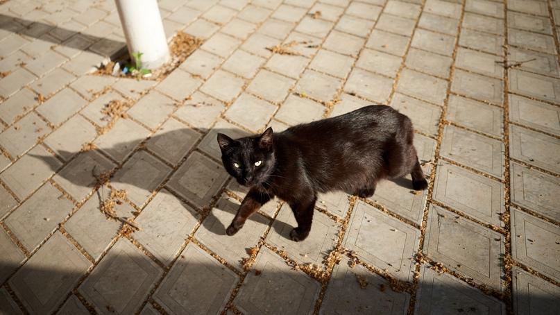 Коты Бориса Панкина 024mFUCrMeI