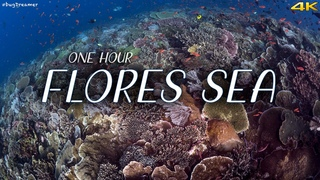 FLORES SEA   1 HOUR Deep Relaxation Dive, Underwater Cinematic, Meditation, Sleeping (Trilogy Part1)