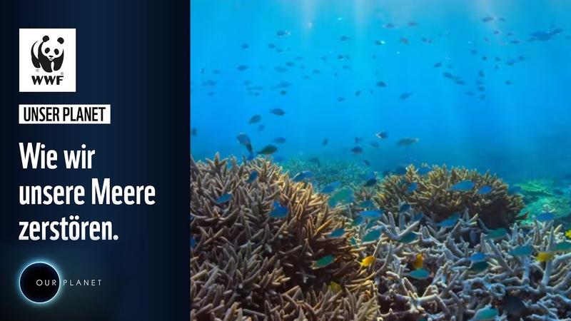 Wie wir unsere Meere zerstören WWF Deutschland