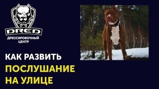 Как научить собаку слушаться на улице   Что делать если собака не прибегает по команде на улице