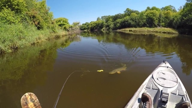 Fishing A Duck Lure For MONSTER Pike · coub коуб