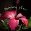 ✿ Домашние цветы ✿