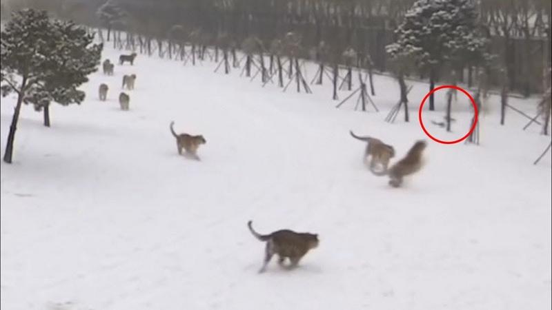 ЖИВОТНЫЕ против ДРОНОВ или как звери нападают на квадрокоптеры!