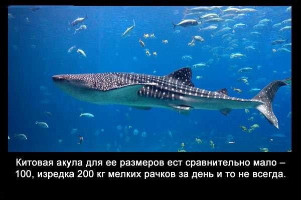 Valteya - Интересные факты о акулах / Хищники морей.(Видео. Фото) - Страница 2 EsdXfxVEZkg