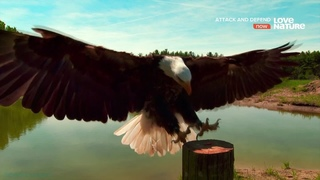«Хищник и жертва (2). Хищные птицы» (Познавательный, природа, животные, 2015)