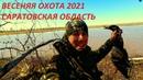 Весенняя охота 2021. Охота на гуся и селезня. Саратовская область / MAX HUNTER