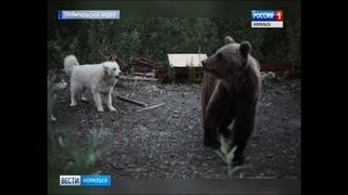 Вести Норильск 27 июля 2018 (пятница)