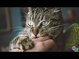 Девушка уже не знала, как выставить надоедливого ухажёра   на помощь пришла кошка…